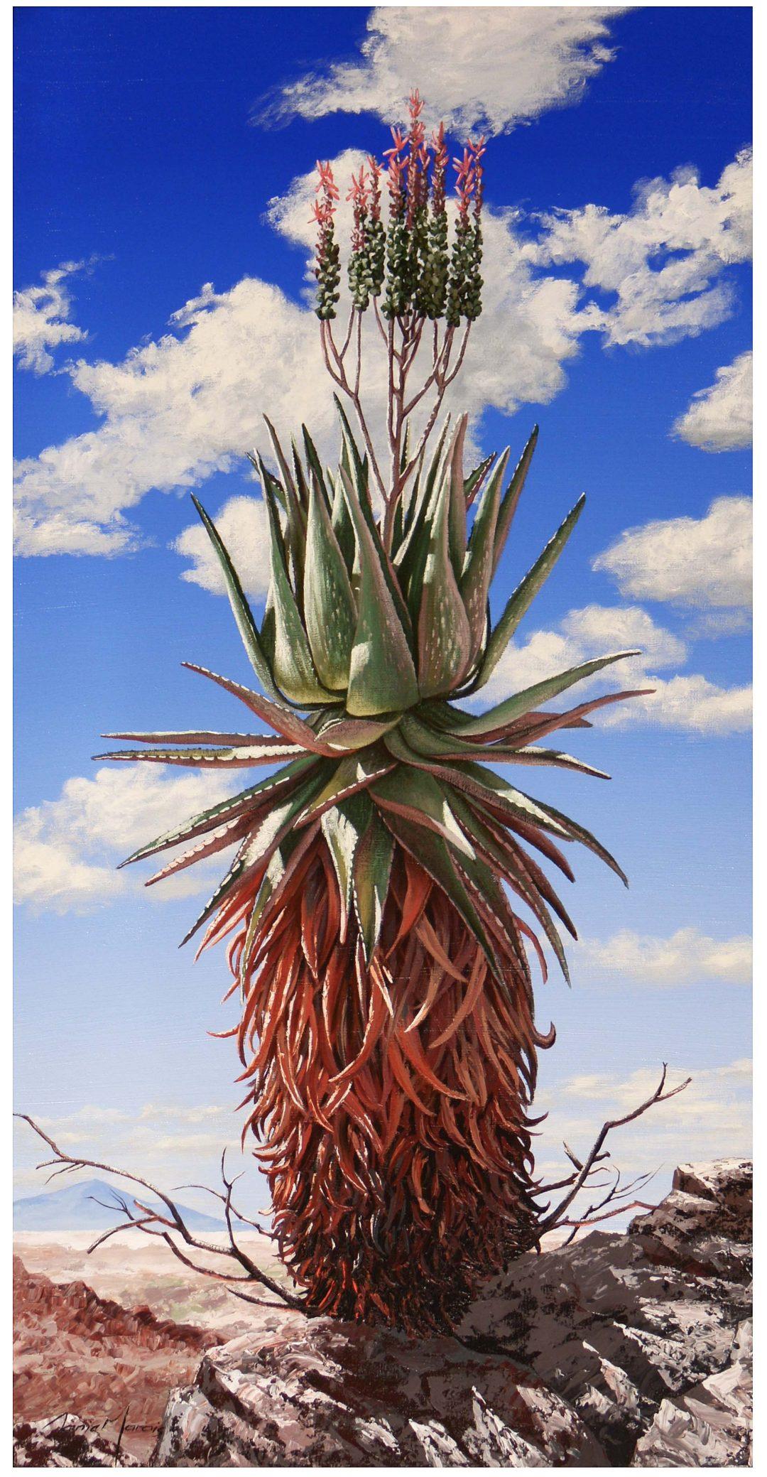 Aloe  in the Skye