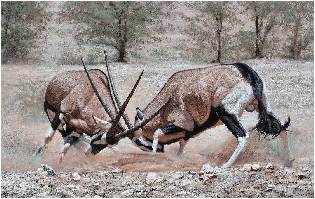 Kalahari Koukus